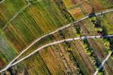 Vineyards within the Mosel's horseshoe bend