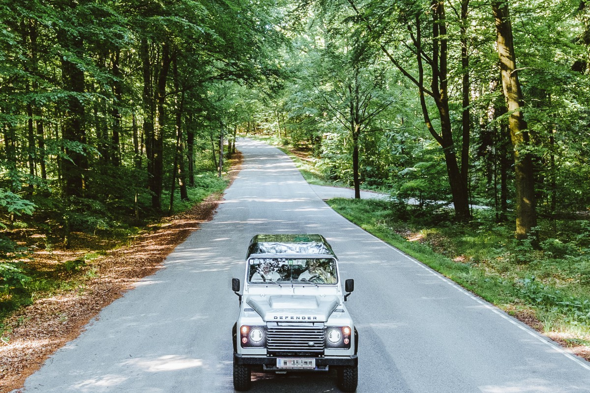 Landy in the Woods