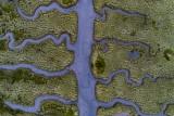 Fishbone shaped salty marsh