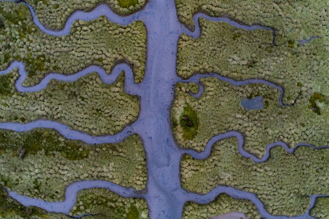 Fishbone shaped salty marsh