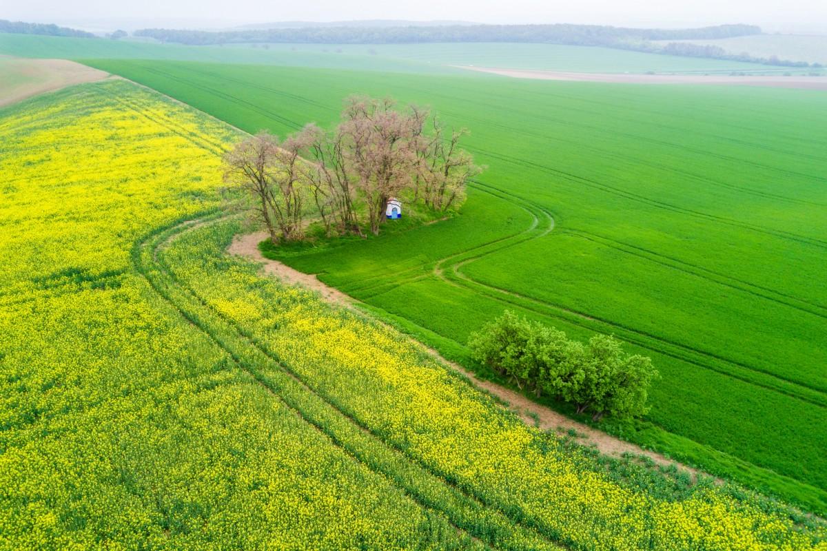 Spring in South Moravia