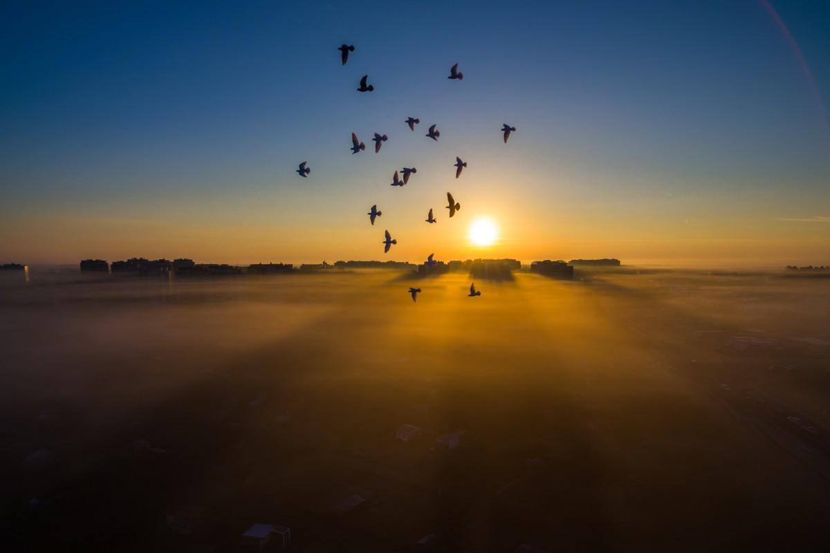 Birds, Lubin, Poland
