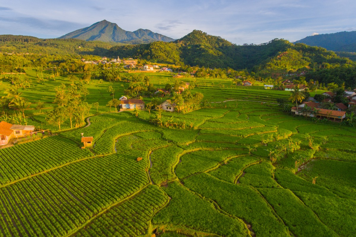 Lush Rice Field and Mt Salak