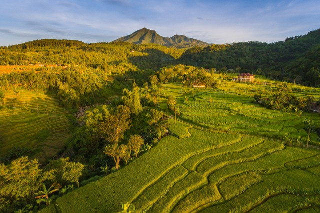 Lush Paddy Fields and The Salak Mountain