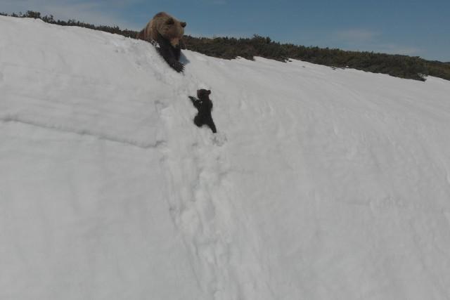 Bear cub&Mammy
