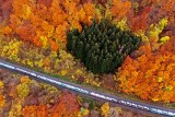 Cartrail in colorful autumn forest