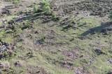 Wild horses, Oia, Galicia, Spain