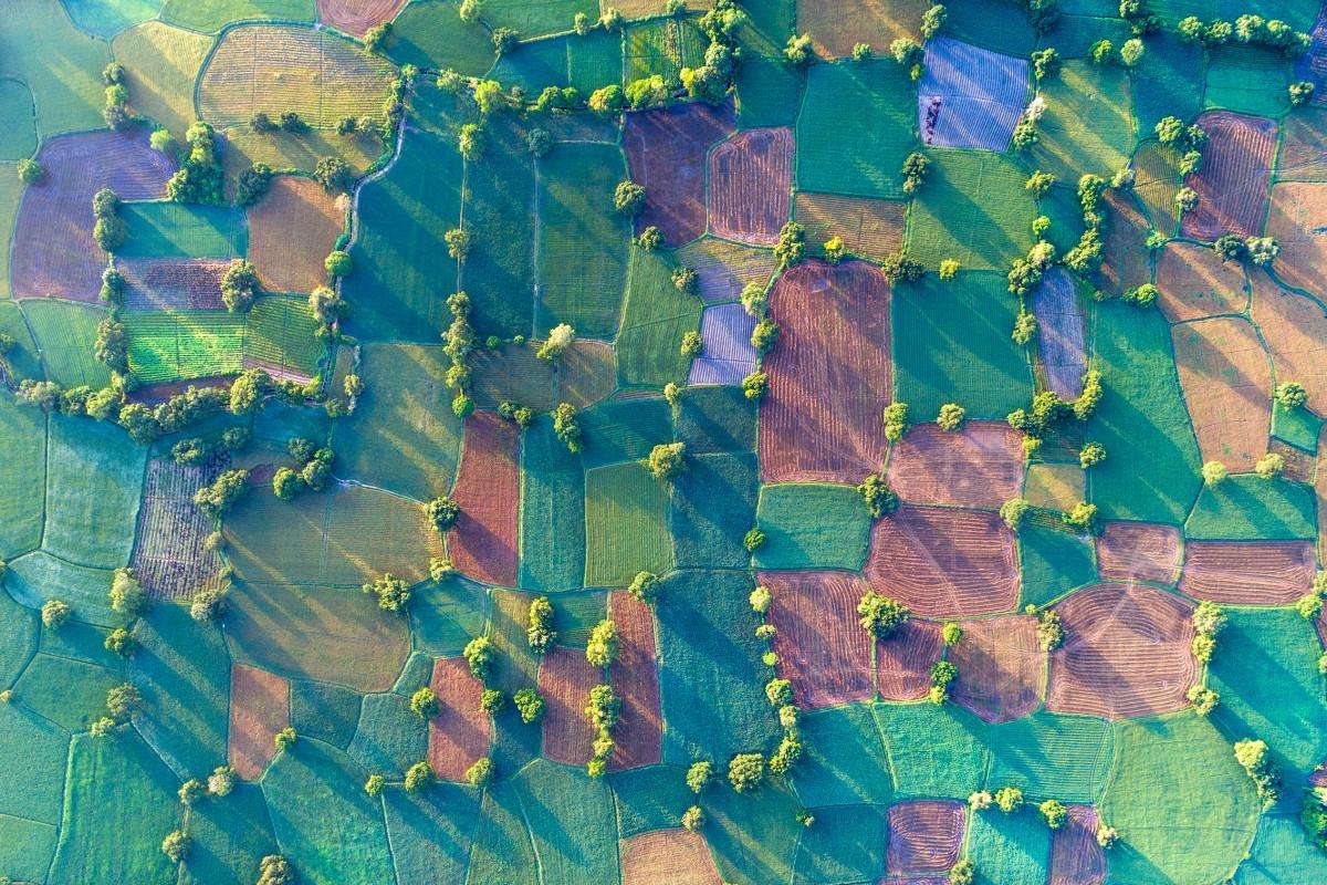 Colorful fields under sunshine