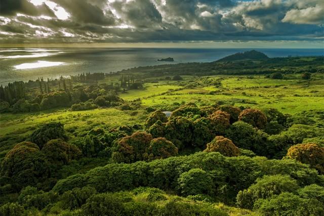 Hana View