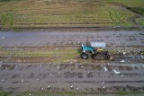 Tractor plough the paddy fields
