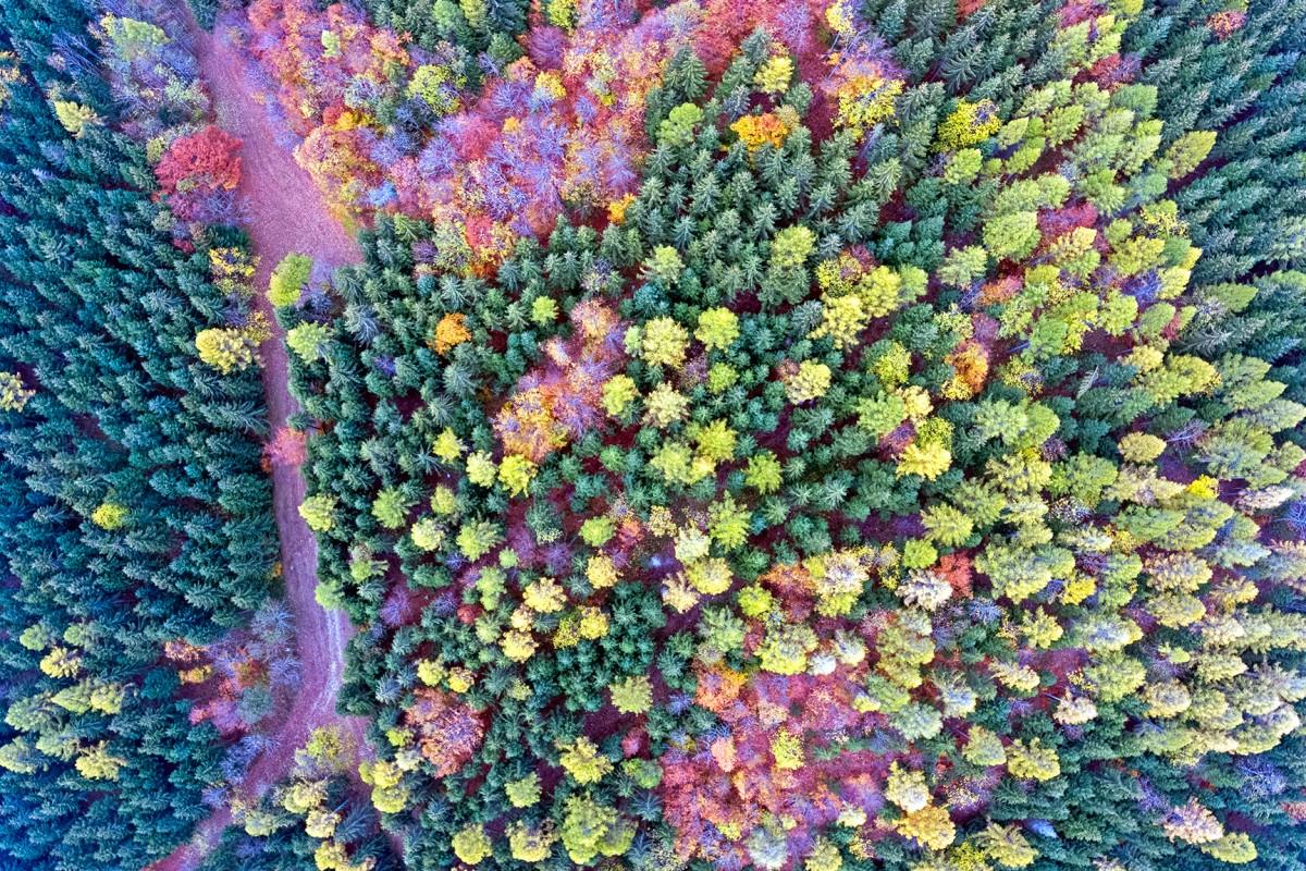 Autumn in the Swiss Jura Mountains