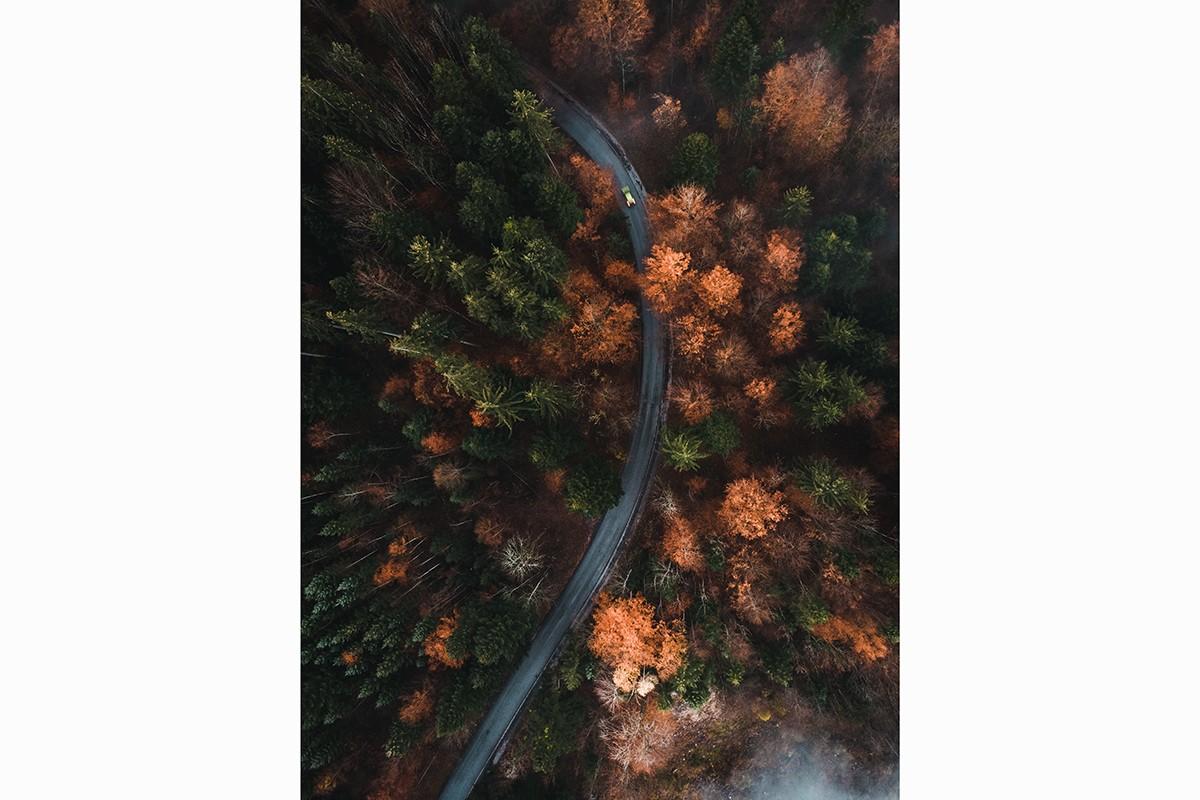 Above Autumn