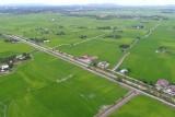 Paddy field in Malaysia Penang