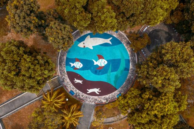 Shark's Playground