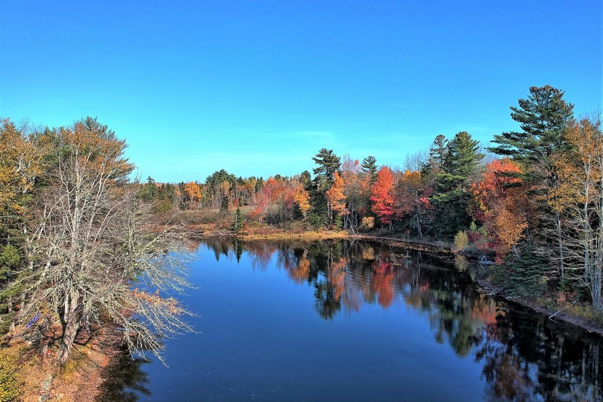 Foliage Downeast Maine
