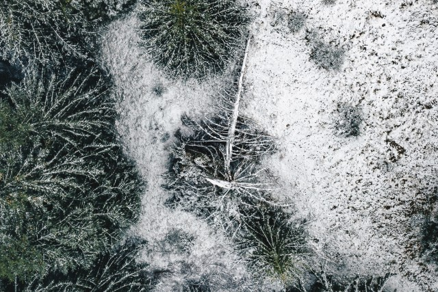 First Snow – Life of a Tree (IV)