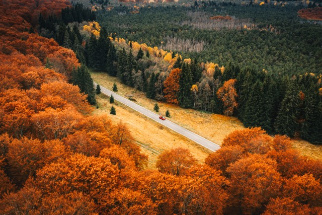 The road to autumn (#2)
