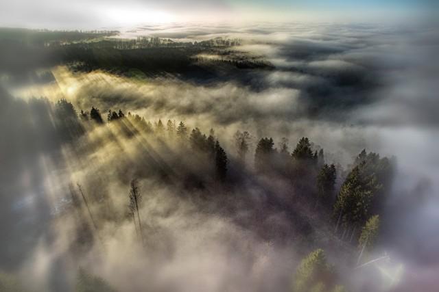 Fog land in the morning