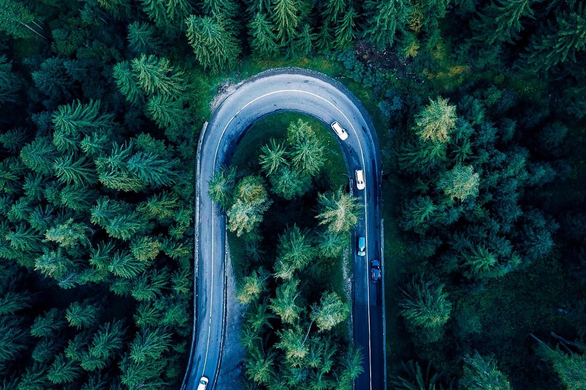 Apline Forest