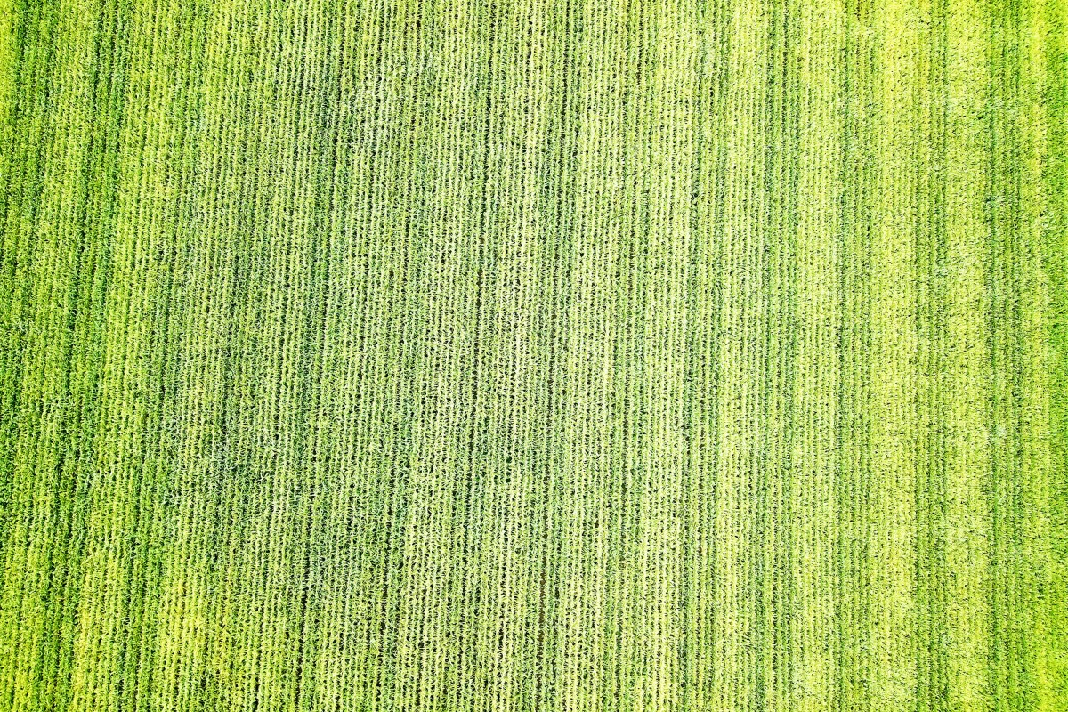 Crops from above