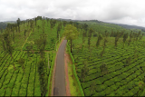 Aerial View Tea Estate and a Long Road