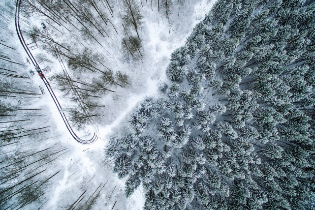 Work in the winter forest