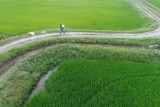 Farmer and hid paddy field