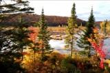 Beautiful Fall Leaves / Quebec, CANADA