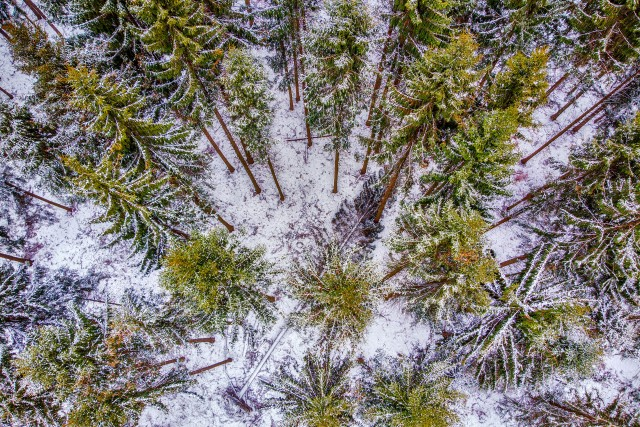 Birds eye view of the forest