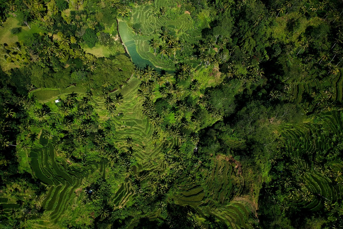 From the sky to the Bali Rice Terrace!