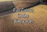 Fall Colors in the Vineyards of Oregon