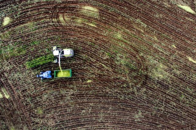 Harvest as in a fight field