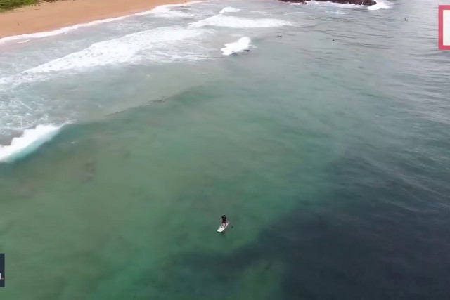 Huge shark lurks beneath paddle boarder in incredible drone footage   Mirror Online