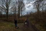 Monkton woods