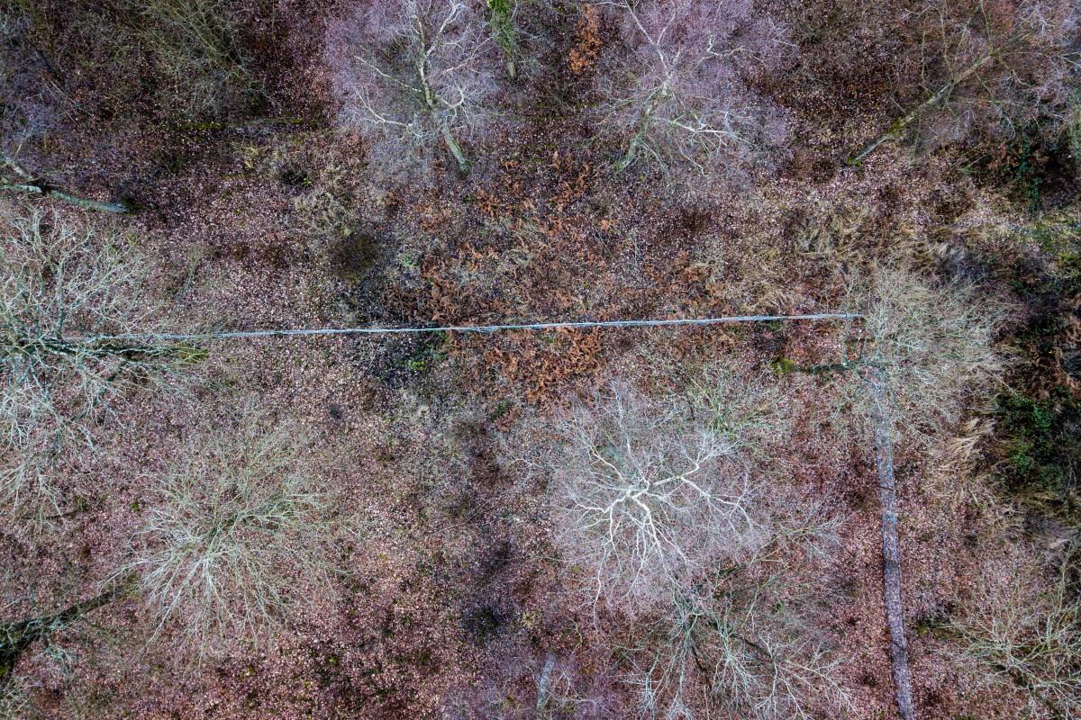 Monkton woods