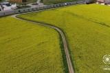 Tramuntana Drone: Brassica napus (Flor de colze, Flor de colza)