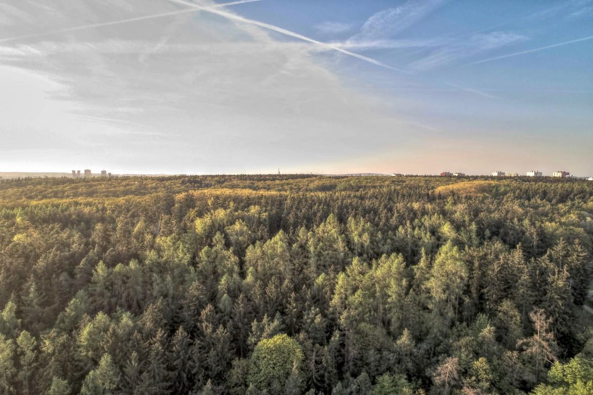 Forest, Czech Republic