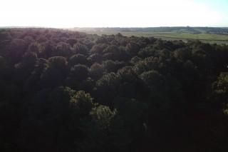 Topo das árvores