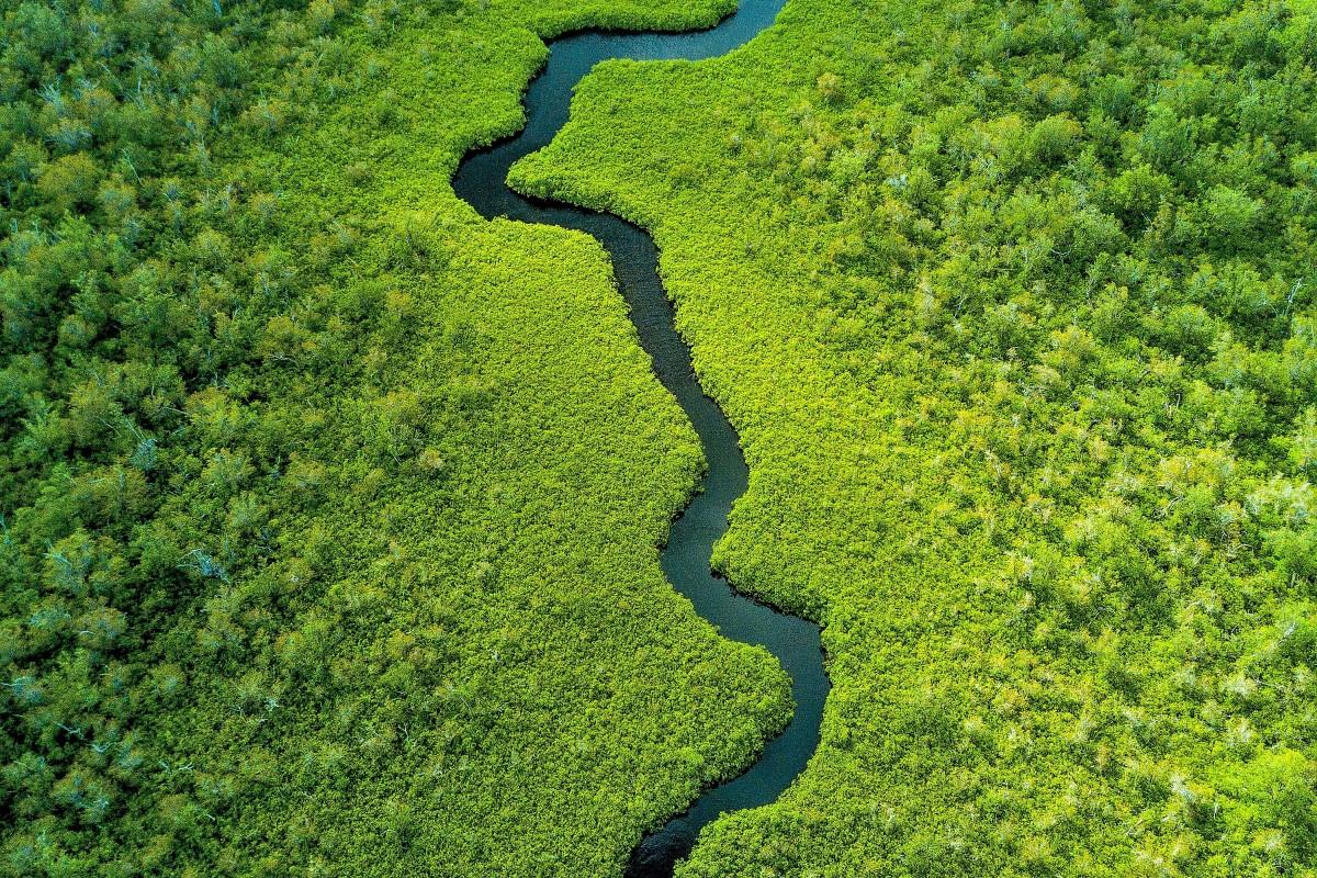 Stream through the mangroves