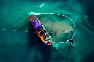Fishnet storm