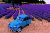 2cv bleue lavande