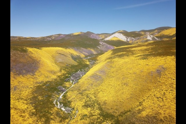 Carrizo Plain Superbloom 2019