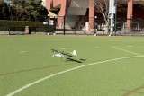 MIT CSAIL makes AI that helps drones land like a helicopter and fly like a plane – VentureBeat