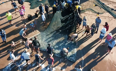 Incredible drone footage captured of sardine netting in Doonside – East Coast Radio