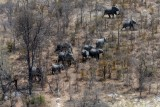 Drone image shows slaughtered elephant carcass – The Province
