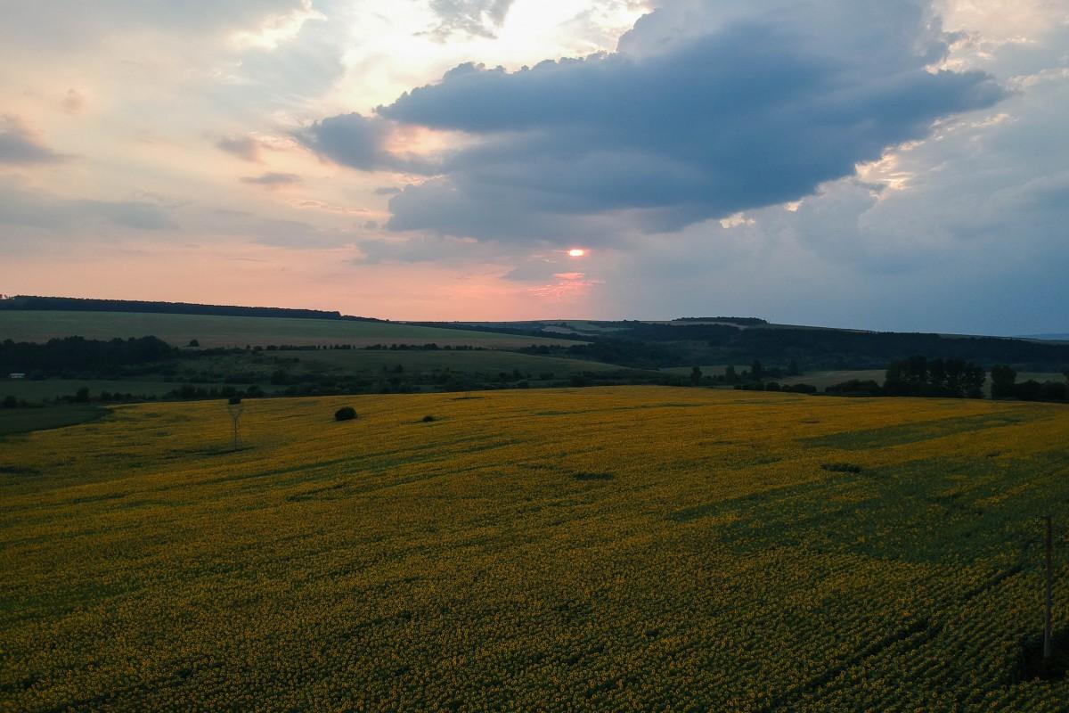 Sunset over the sunflower fields