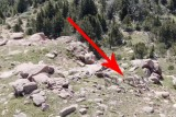 Watch: Drone Captures Stunning View of Sheep on Colorado Mountain – Geek