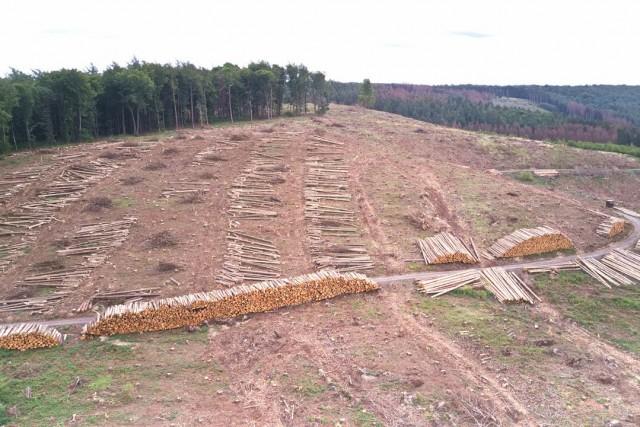 Aktuelle Zerstörung des Waldes durch den Borkenkäfer – Naturkatastrophe