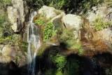 Minnamurra Rainforest, New South Wales, Australia,