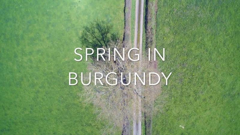 Spring in Burgundy